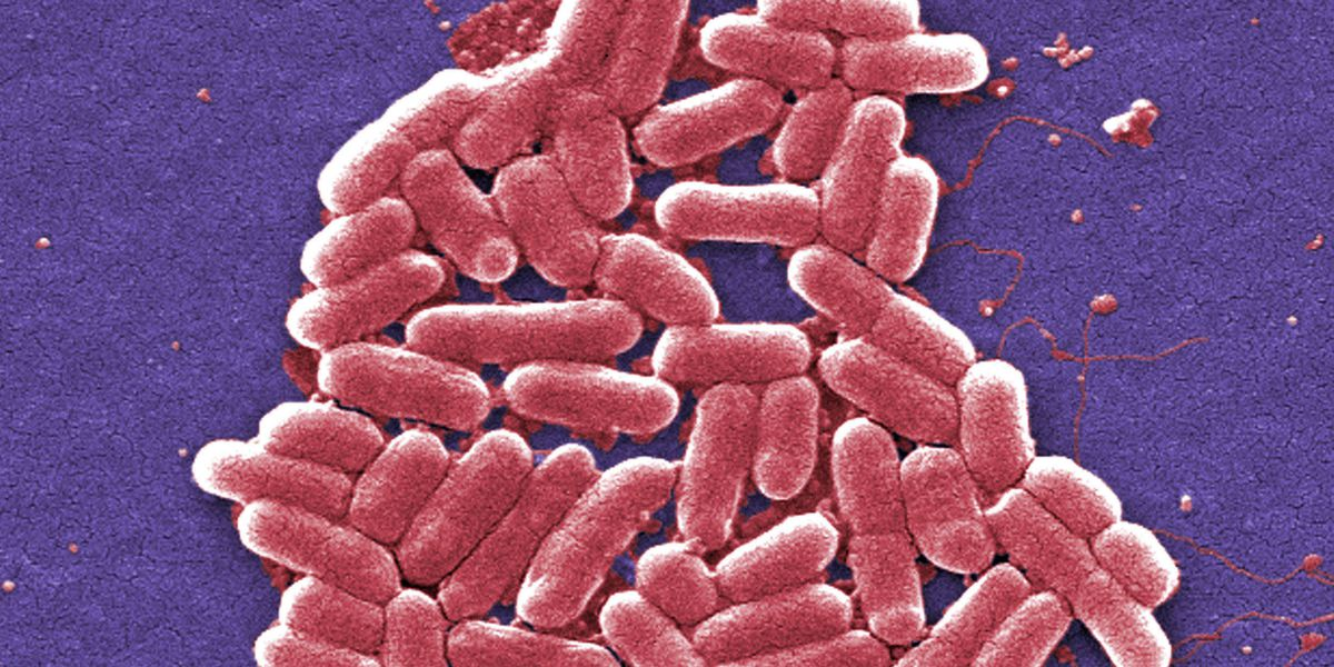 US superbug infections rising, but deaths are falling