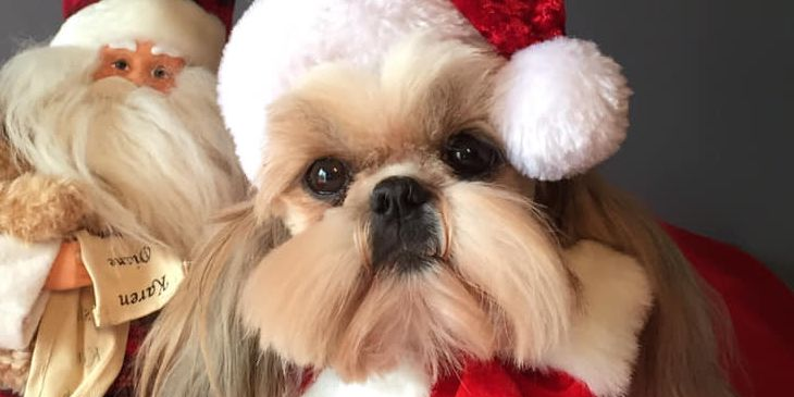 Christmas critters: Dressing up our pets for the holidays