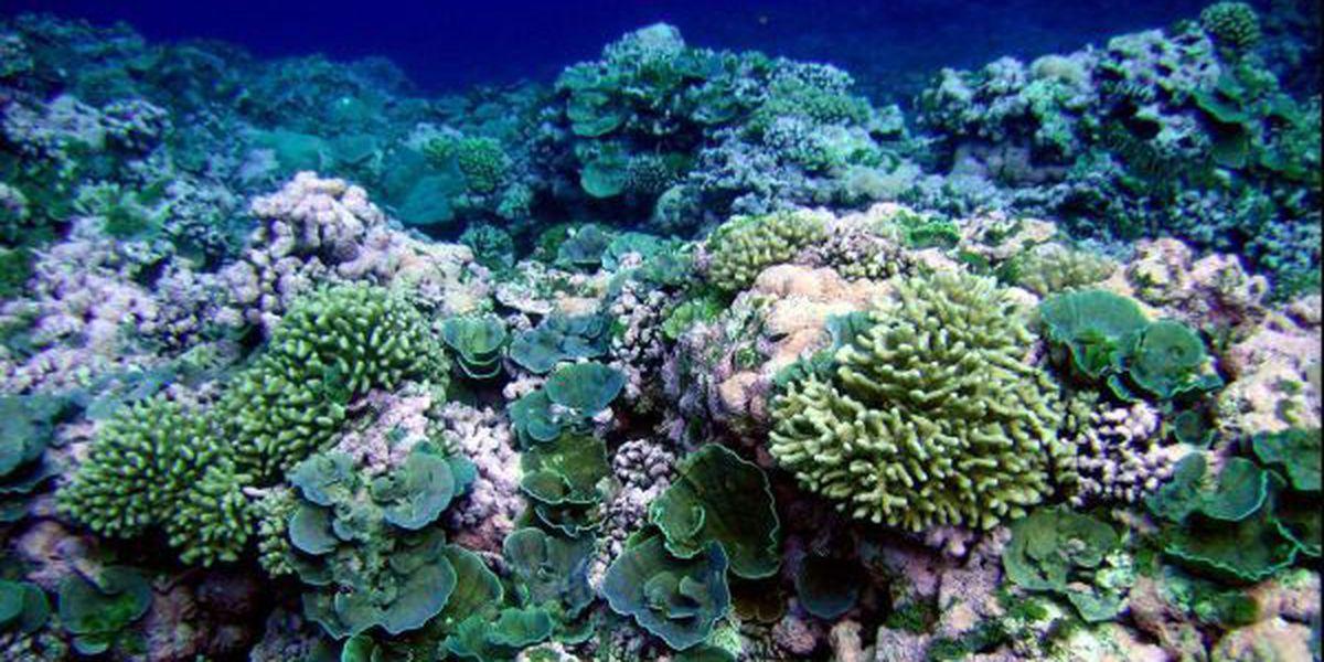 Hawaii reef now a 'hope spot'