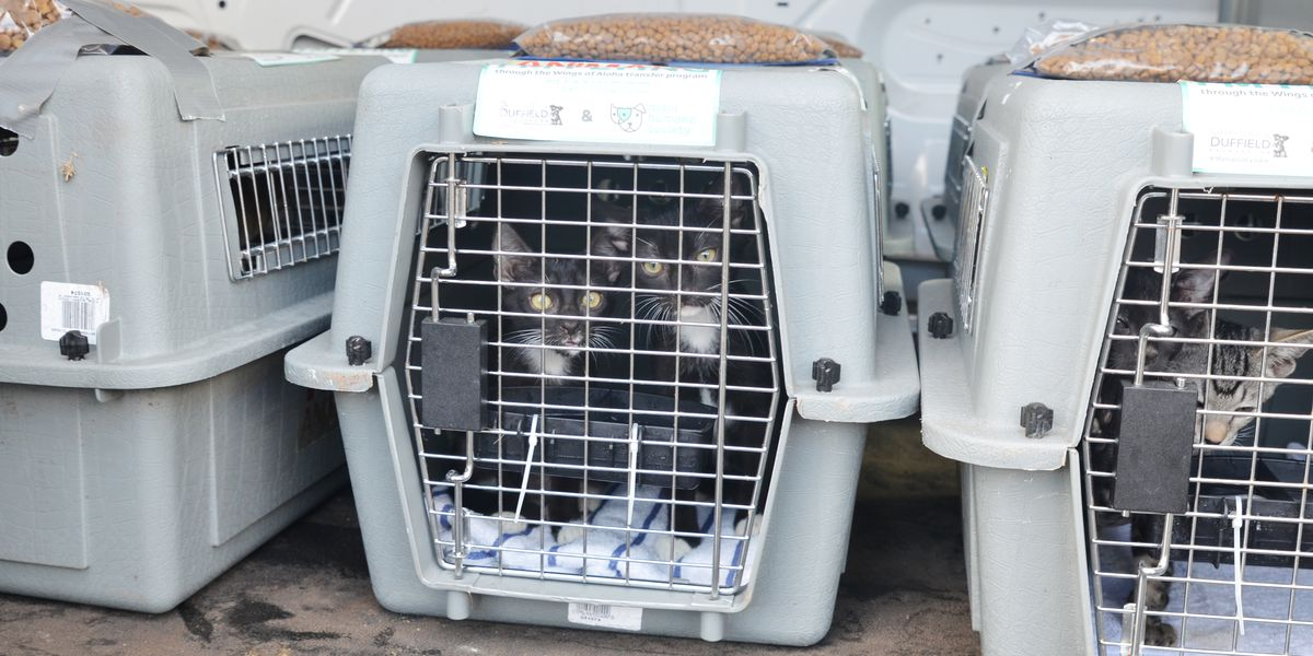 Hundreds of Hawaii's shelter animals to be relocated to the mainland