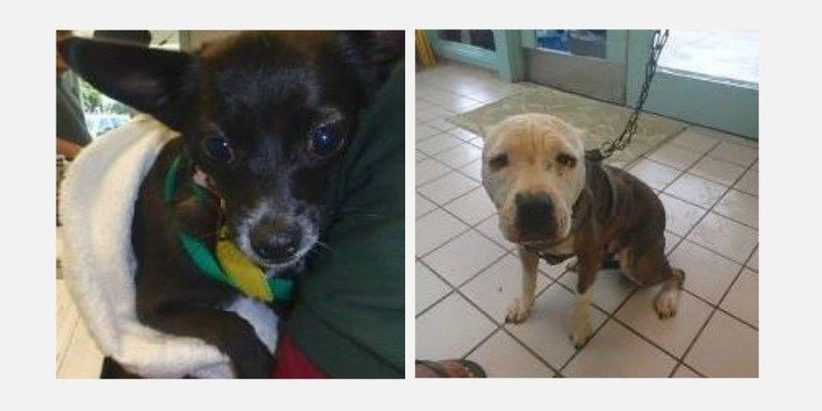 2 dogs missing from Hawaiian Humane Society may have been stolen