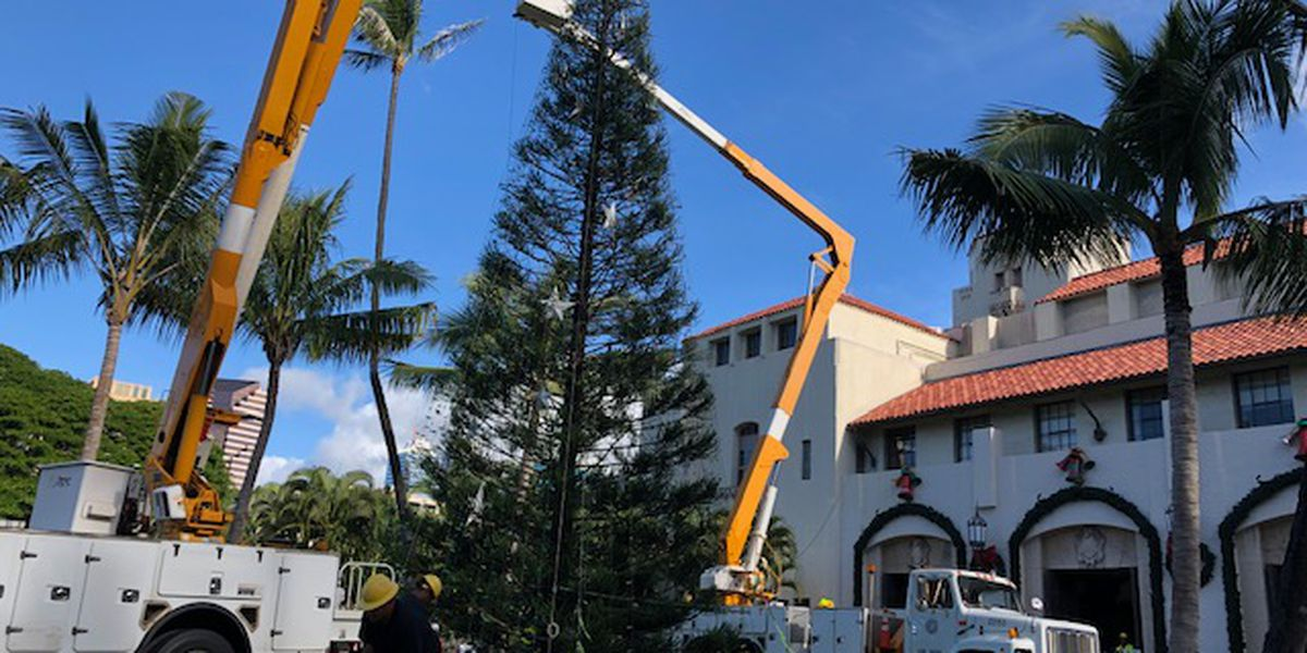 Making the cut: How the city selects the tree for Honolulu City Lights