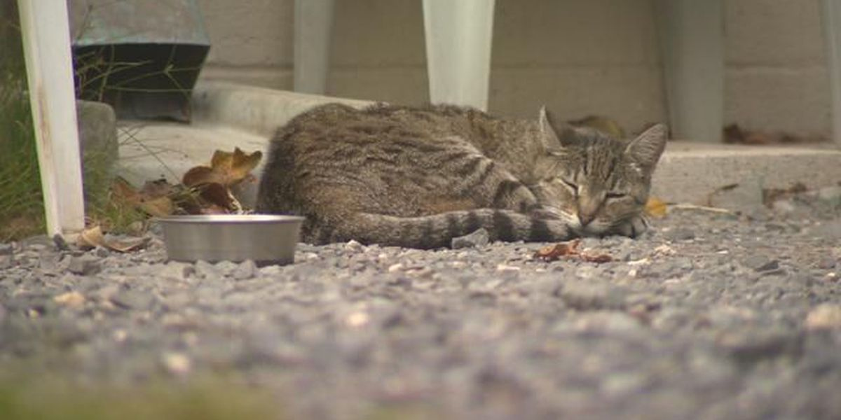 Public not allowed at Kauai committee meetings on feral cats