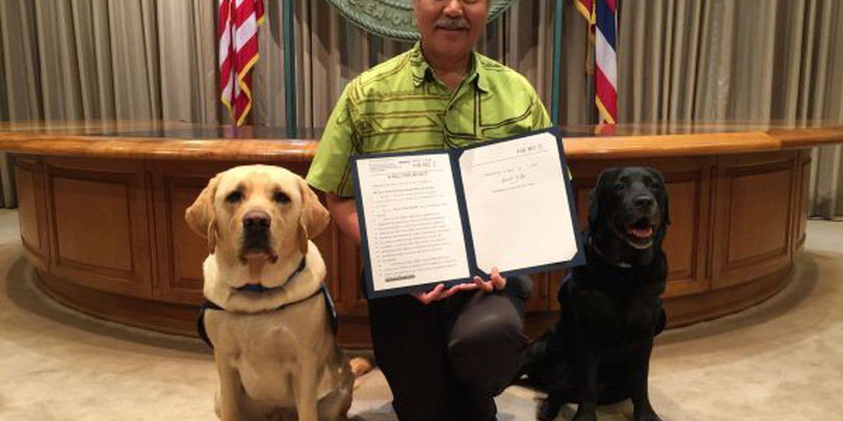 New law allows dogs in Hawaii courtrooms for vulnerable witnesses