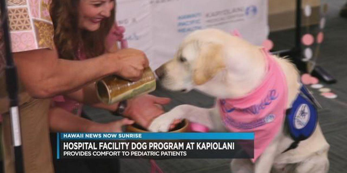 Kapi?olani Medical Center for Women & Children welcomes new hospital facility dog