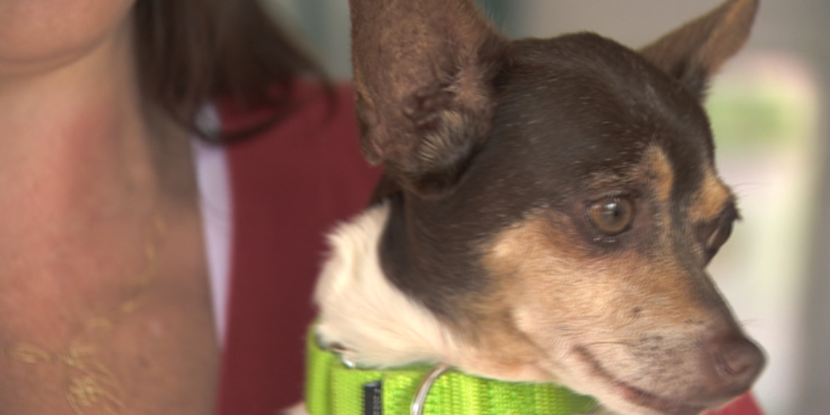How to keep pets safe during July Fourth festivities