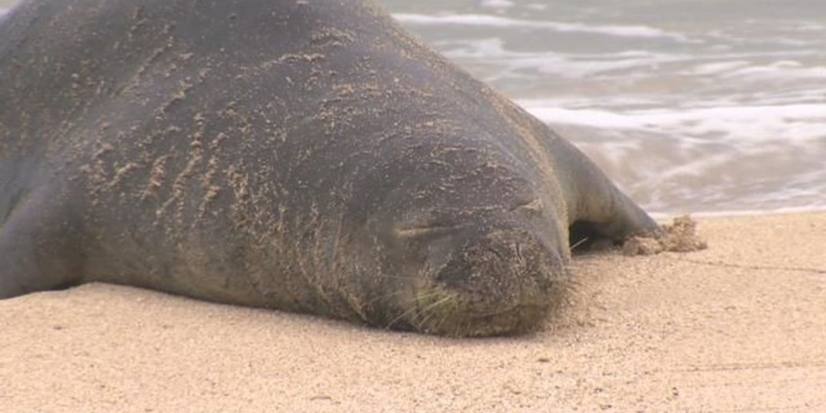 Suit filed over confrontations over Hawaiian monk seals