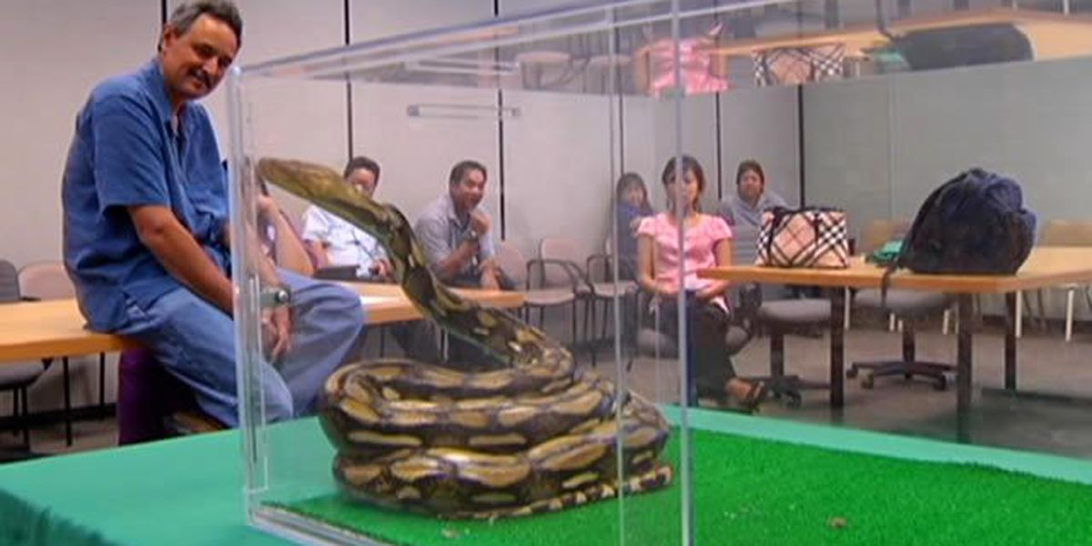 Nine-foot python turned in to ag officials on Oahu