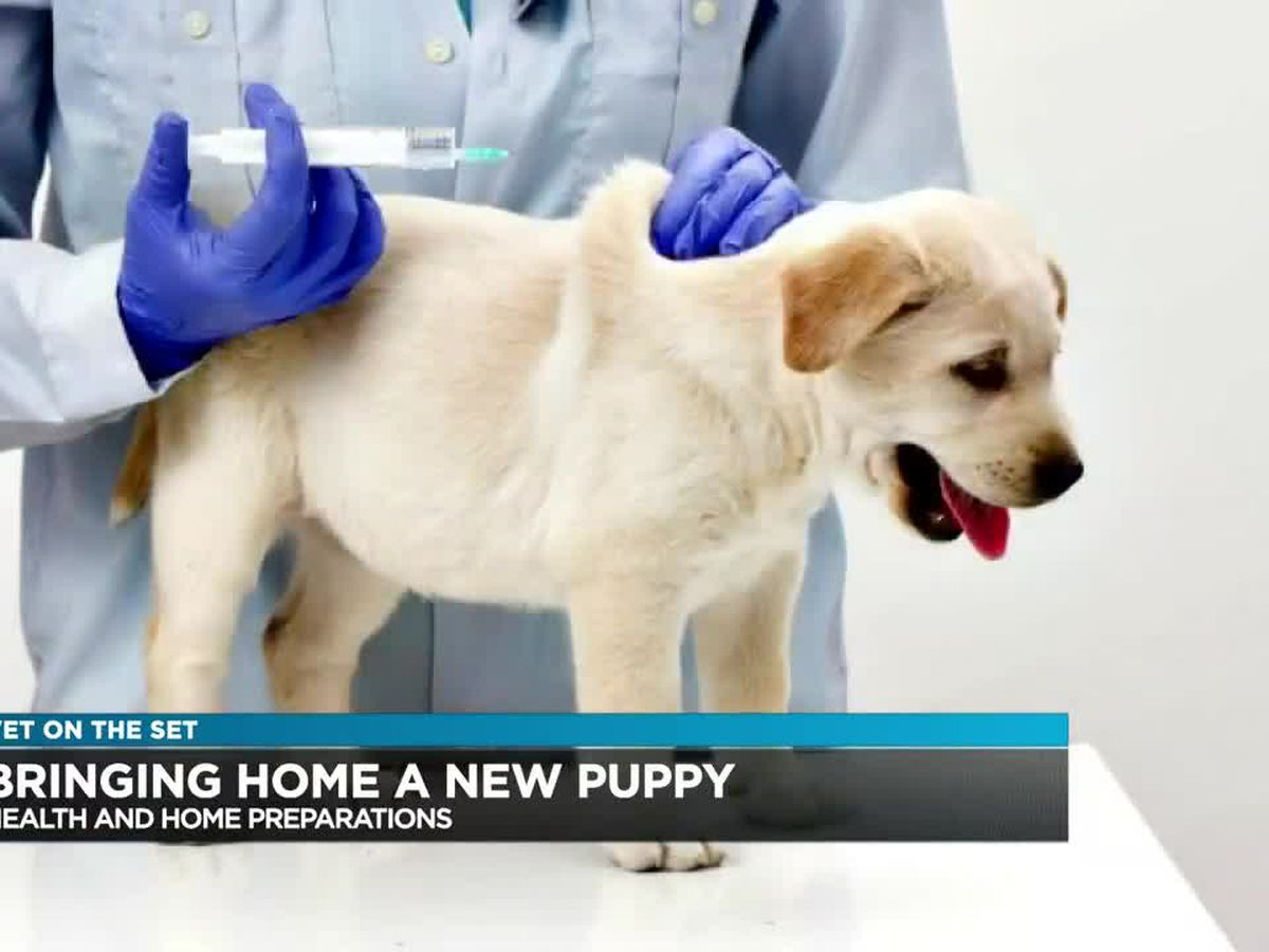 Vet on the Set: Importance of checking the health of your dog when adopting