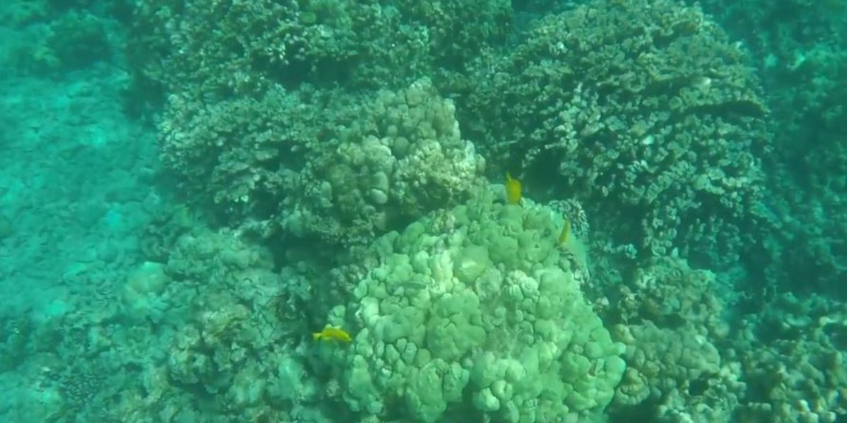 State: Coral bleaching already being seen in Hawaii waters