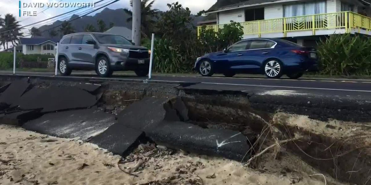 State says Kaaawa homeowner who chopped down trees fronting shoreline had no permit; neighbors are outraged