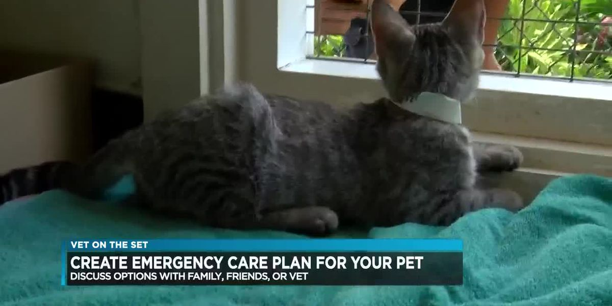 Vet on Set: Pet owners asked to make emergency care plans for their animals