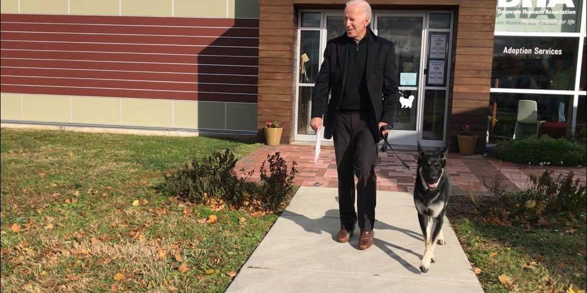 2020 walking or running mate? Former Vice President Joe Biden adopts German Shepherd from animal shelter