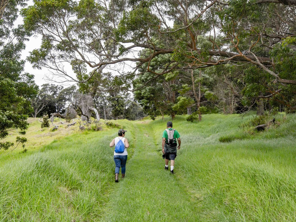 After being closed to protect native ohia, Volcanoes National Park to reopen 2 trails