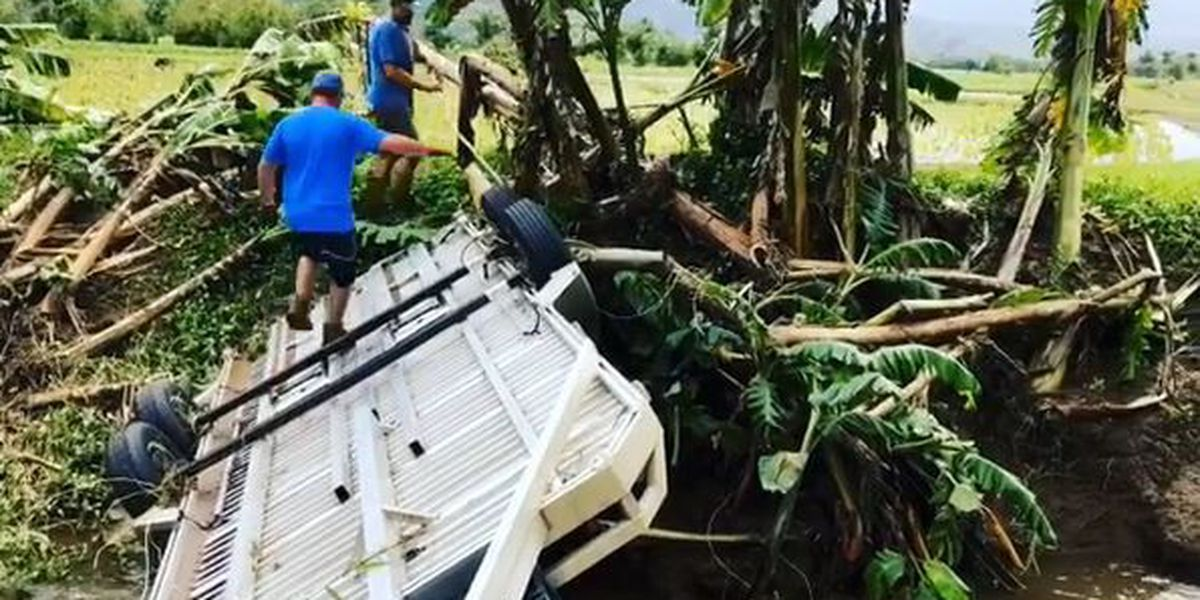 Hanalei taro farmers urge public to 'stay away' as farms recover from floods
