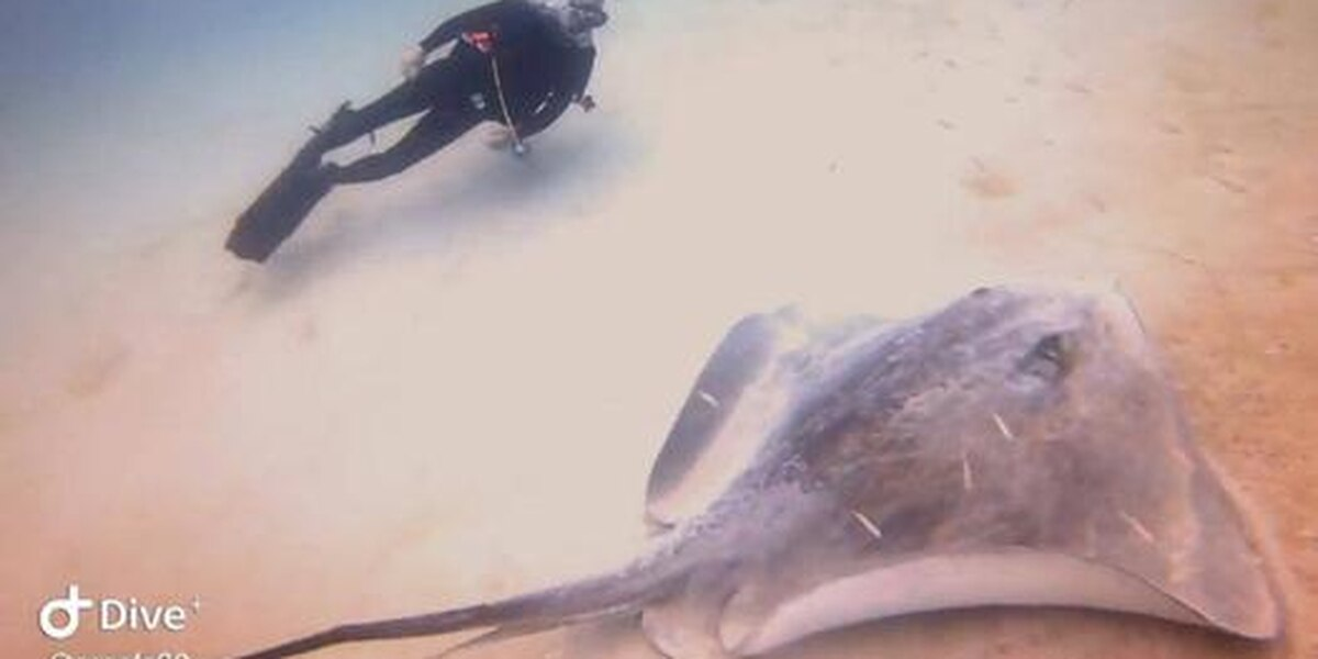 Giant stingray spotted in Gulf of Mexico