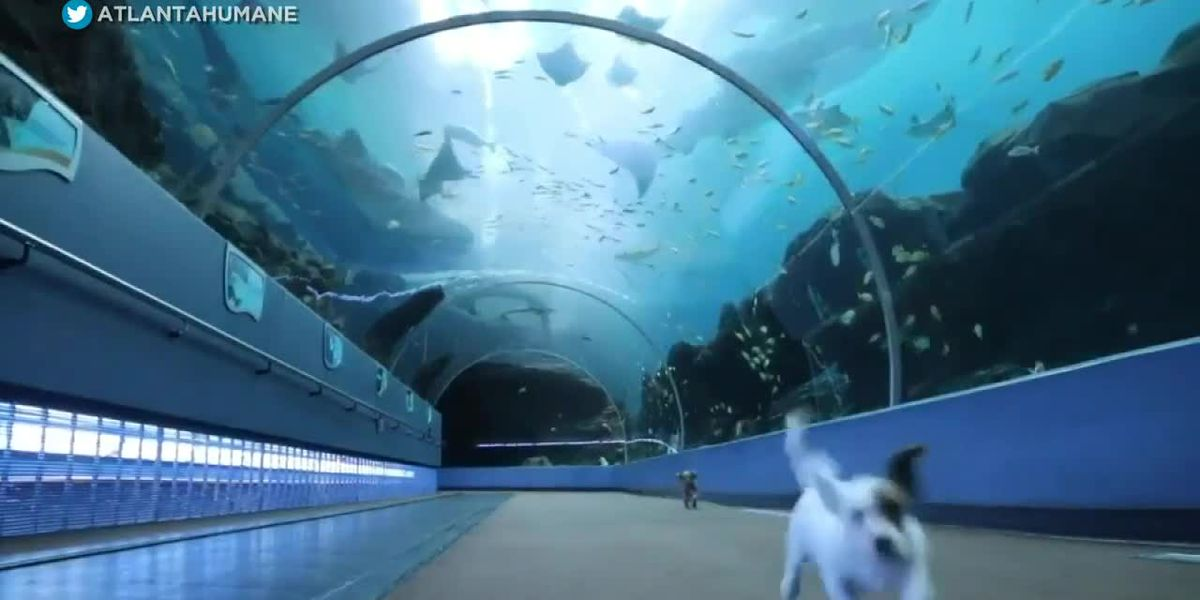Trending: kid journalists adjust amid COVID-19, lion not practicing social distancing, puppies in the aquarium