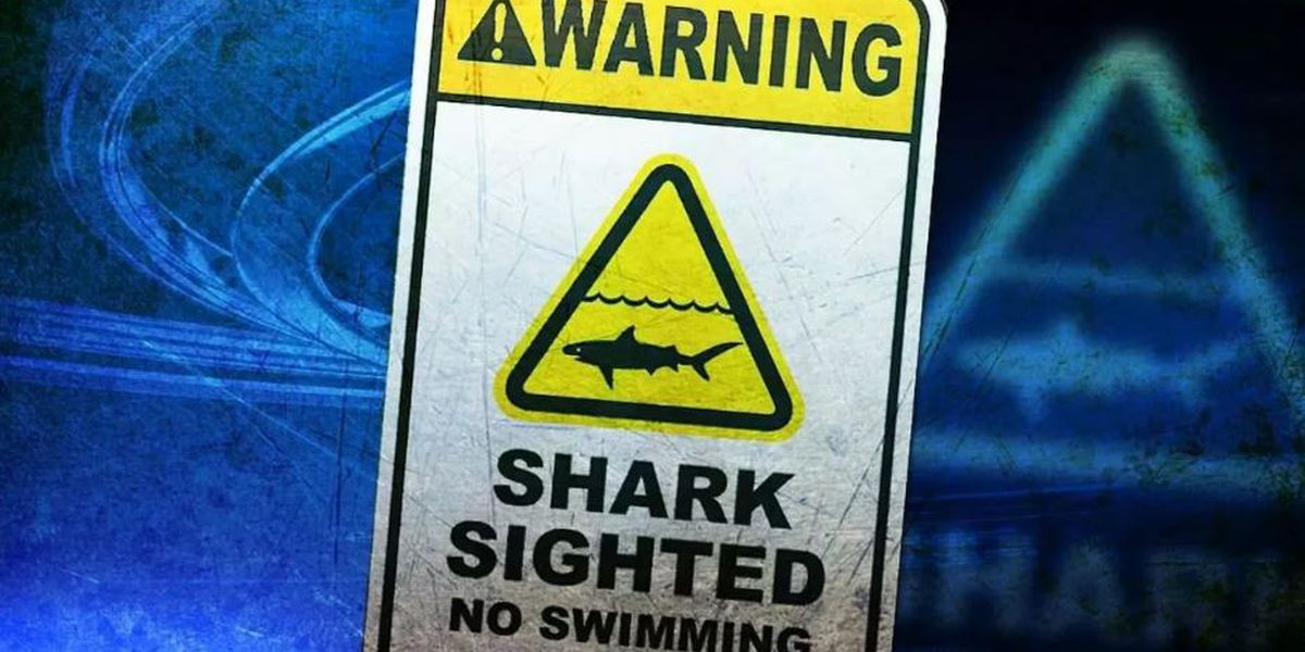 'Aggressive' shark spotted near a beach on Oahu's North Shore