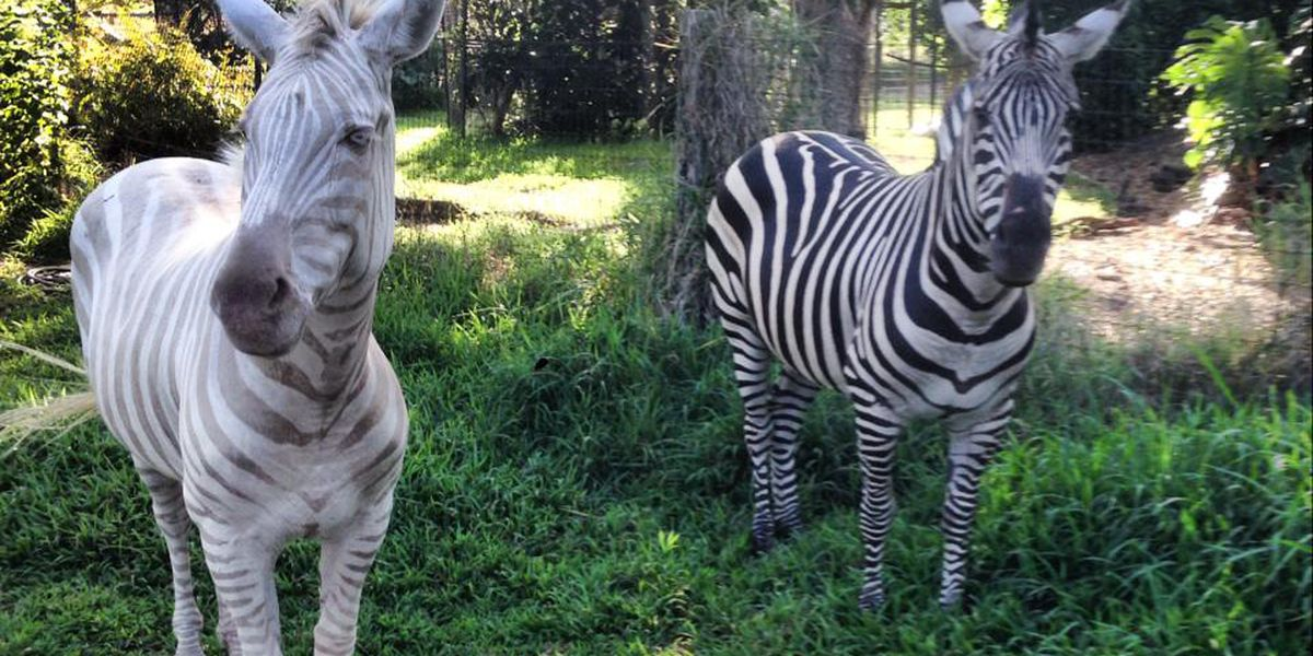 Hawaii's only exotic animal sanctuary receives full re-accreditation