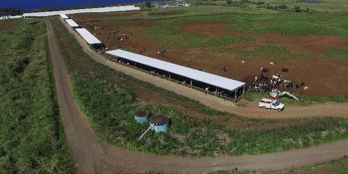 State fines Big Island Dairy over fecal pollution violations