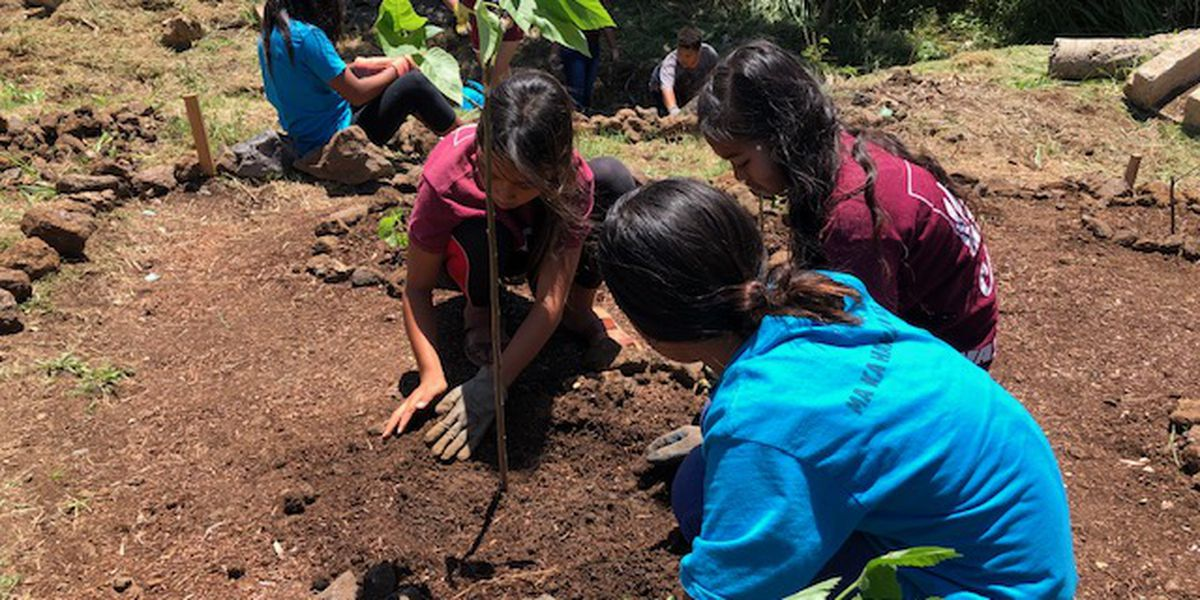Elementary school students' cleanup project breathes life into Kaewai stream