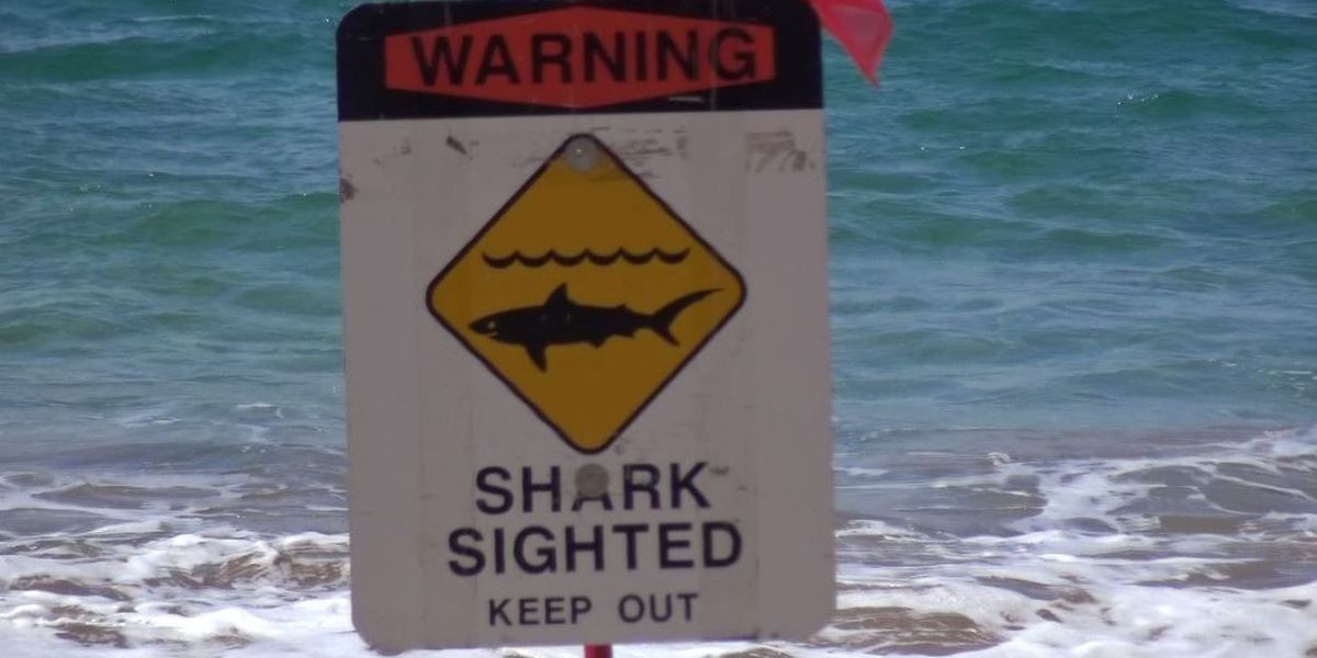 Maui shark warning canceled