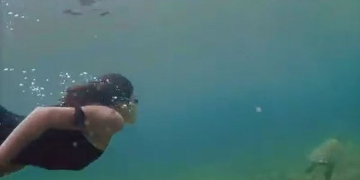Airbnb pulls ad of tourist touching sea turtle after social media backlash