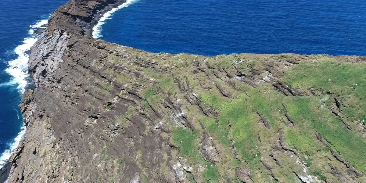 After years of infestation, a rat-free Lehua Island now welcomes native plants and birds