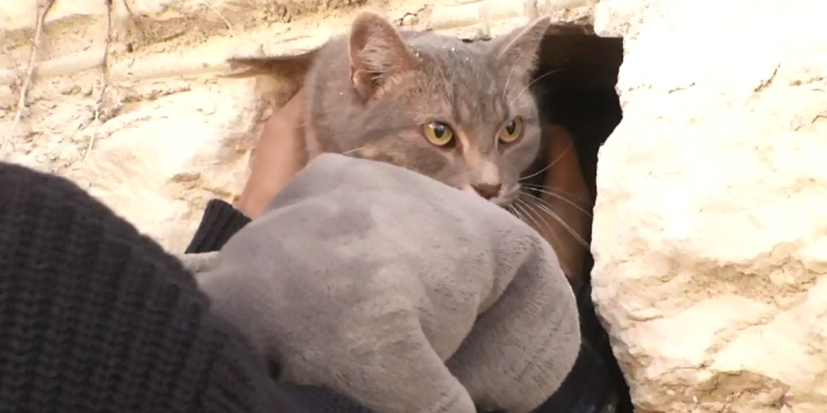 Cat rescued from chimney after being trapped inside for four days