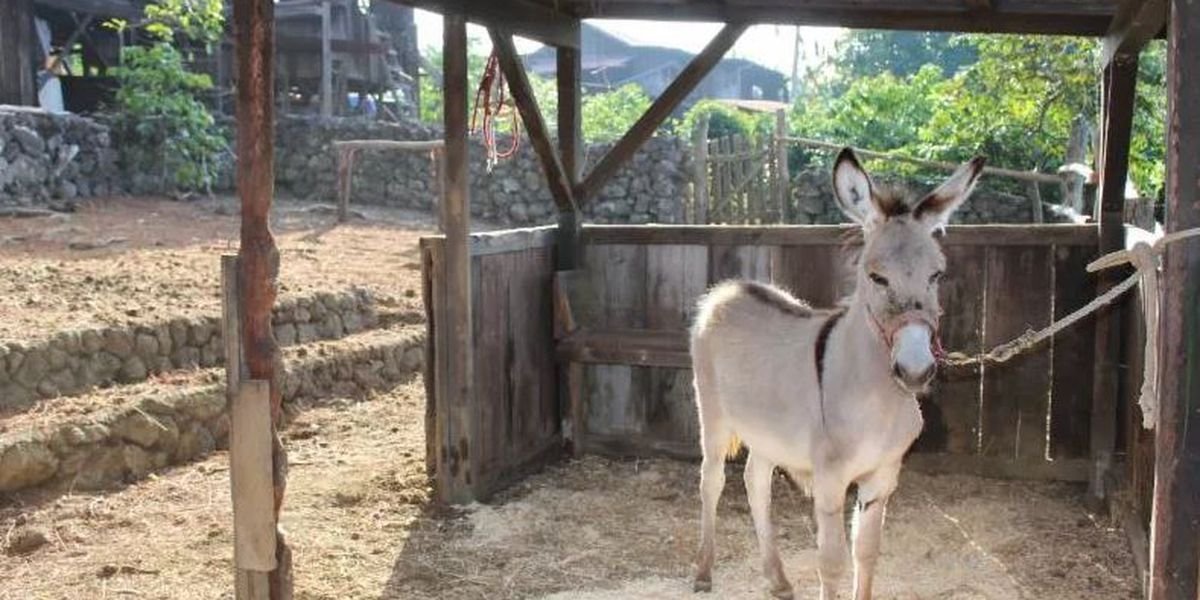 Community mourns after treasured Kona donkey killed by stray bullet