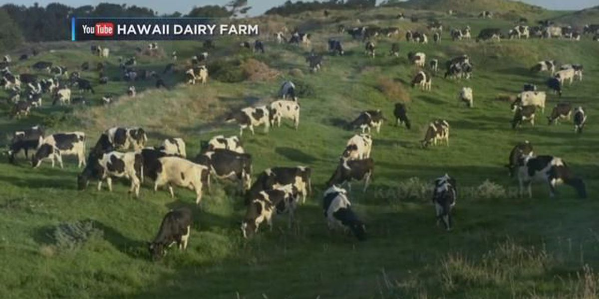 Planned dairy in Hawaii delays approval process