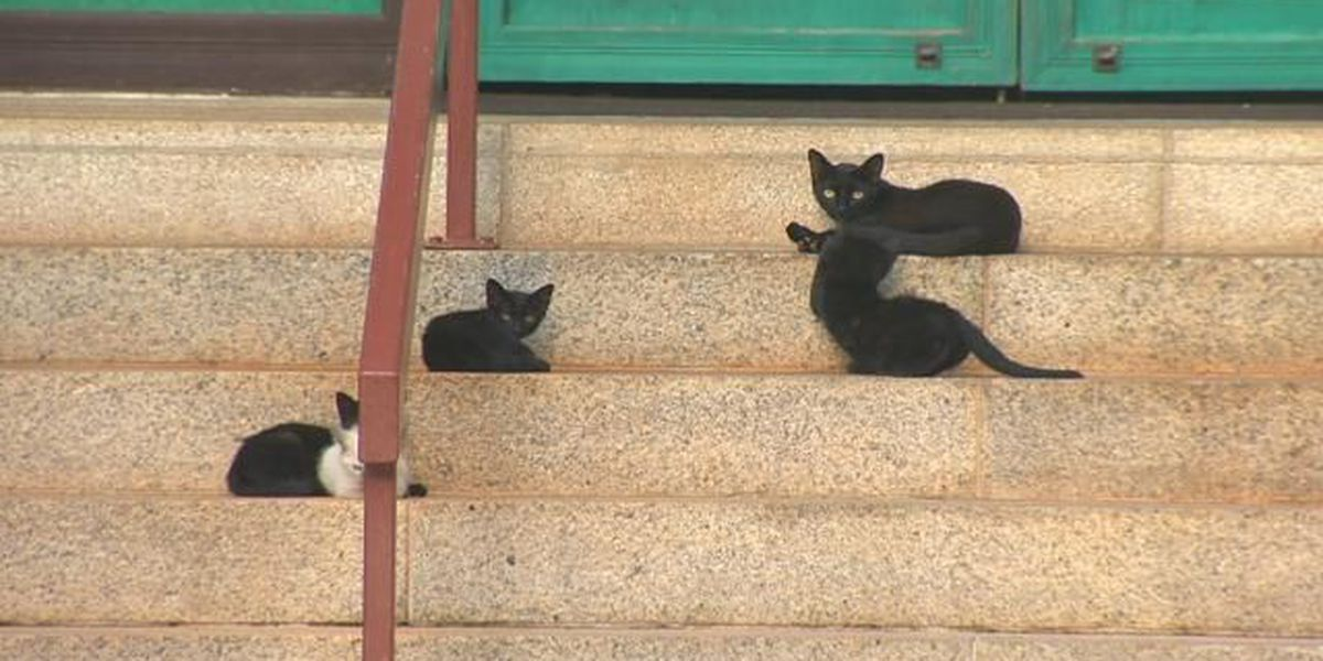 Hawaii looks to make harsher penalties for dumping pets
