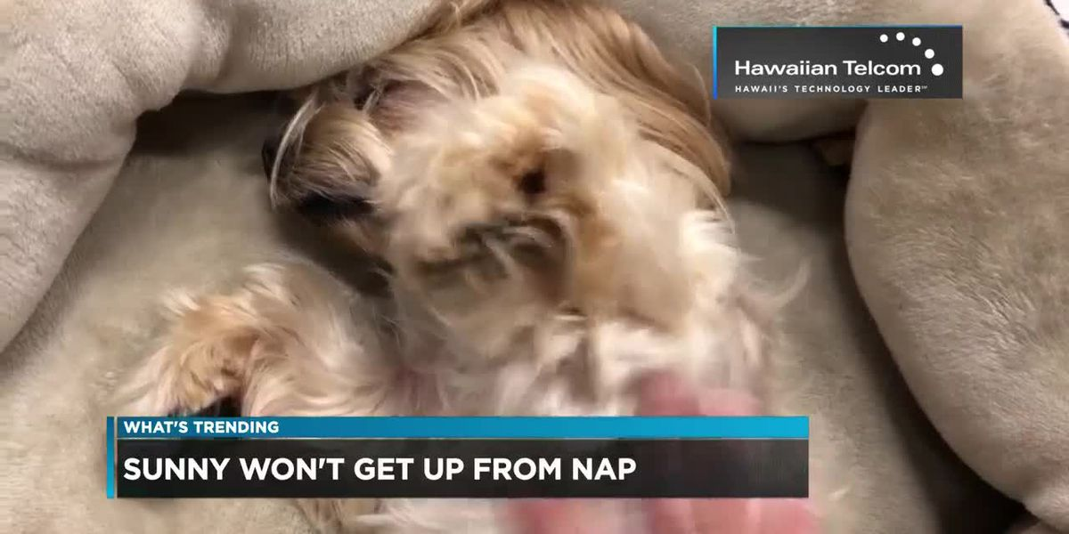 Trending: Unalienable rights, cheese roll, Sunny is sleepy