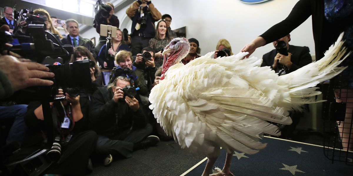 Trump pardoned a turkey named Peas for Thanksgiving