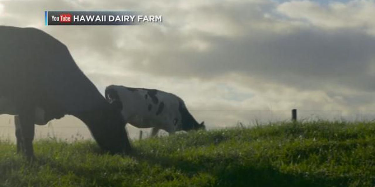 Dairy farm violated Clean Water Act, told to pay up