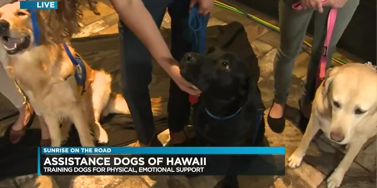SOTR Giving Tuesday: Assistance Dogs of Hawaii