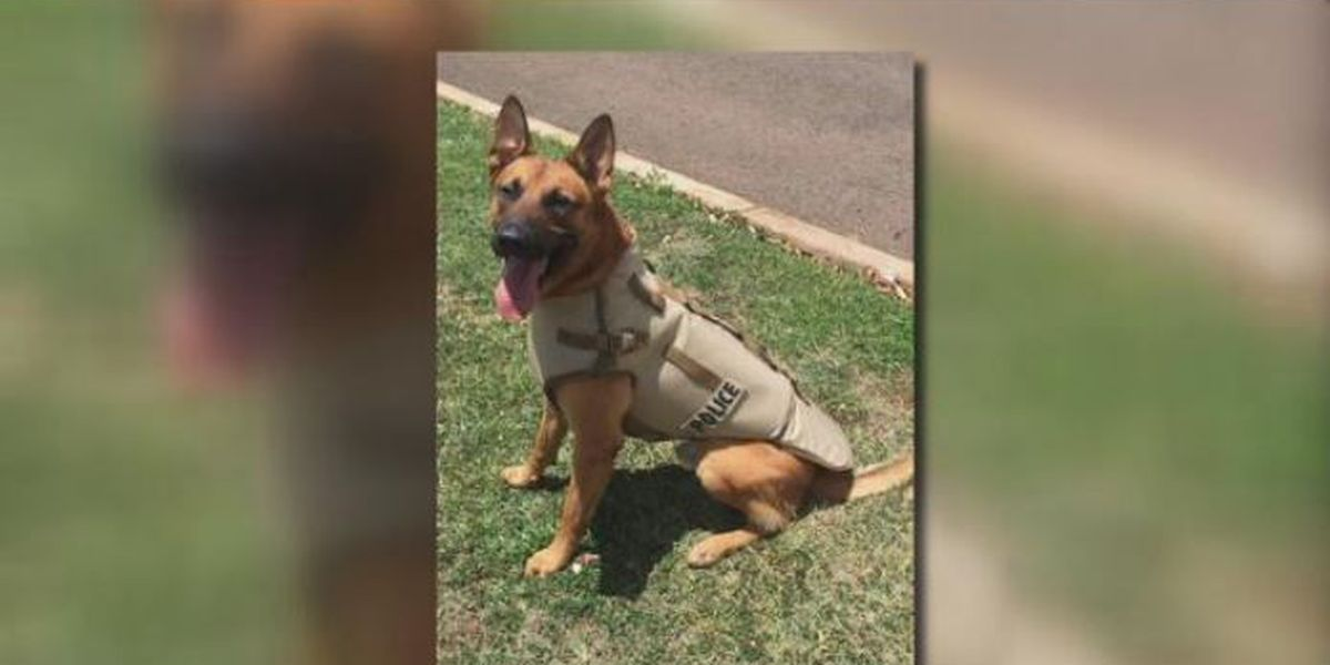 Man dies, police K-9 stabbed after shooting on Oahu's North Shore
