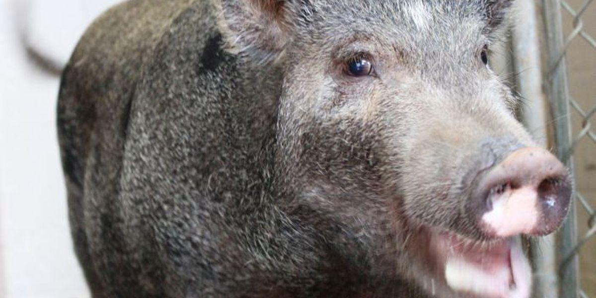 Hawaiian Humane Society now offering $10 adoptions