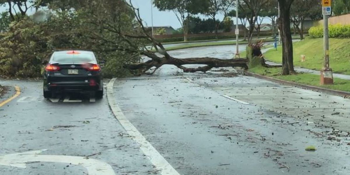 PHOTOS: Mid-February storm pummels Hawaii with strong wind, high surf