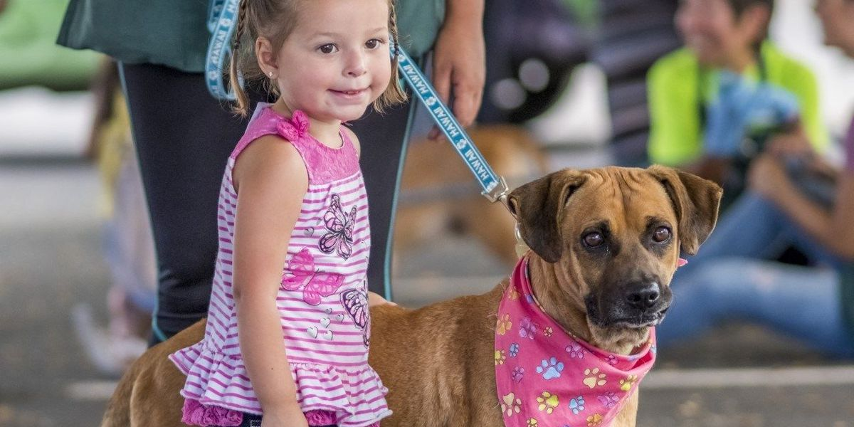 Nearly 200 dogs rescued from Makaha shelter have been adopted, humane society says