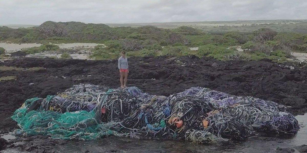 'Huge,' 40-ton mass of fishing nets washes ashore on Hawaii beach