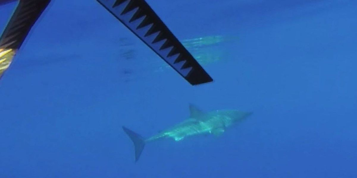 Maui fisherman spends an hour at sea with great white circling kayak