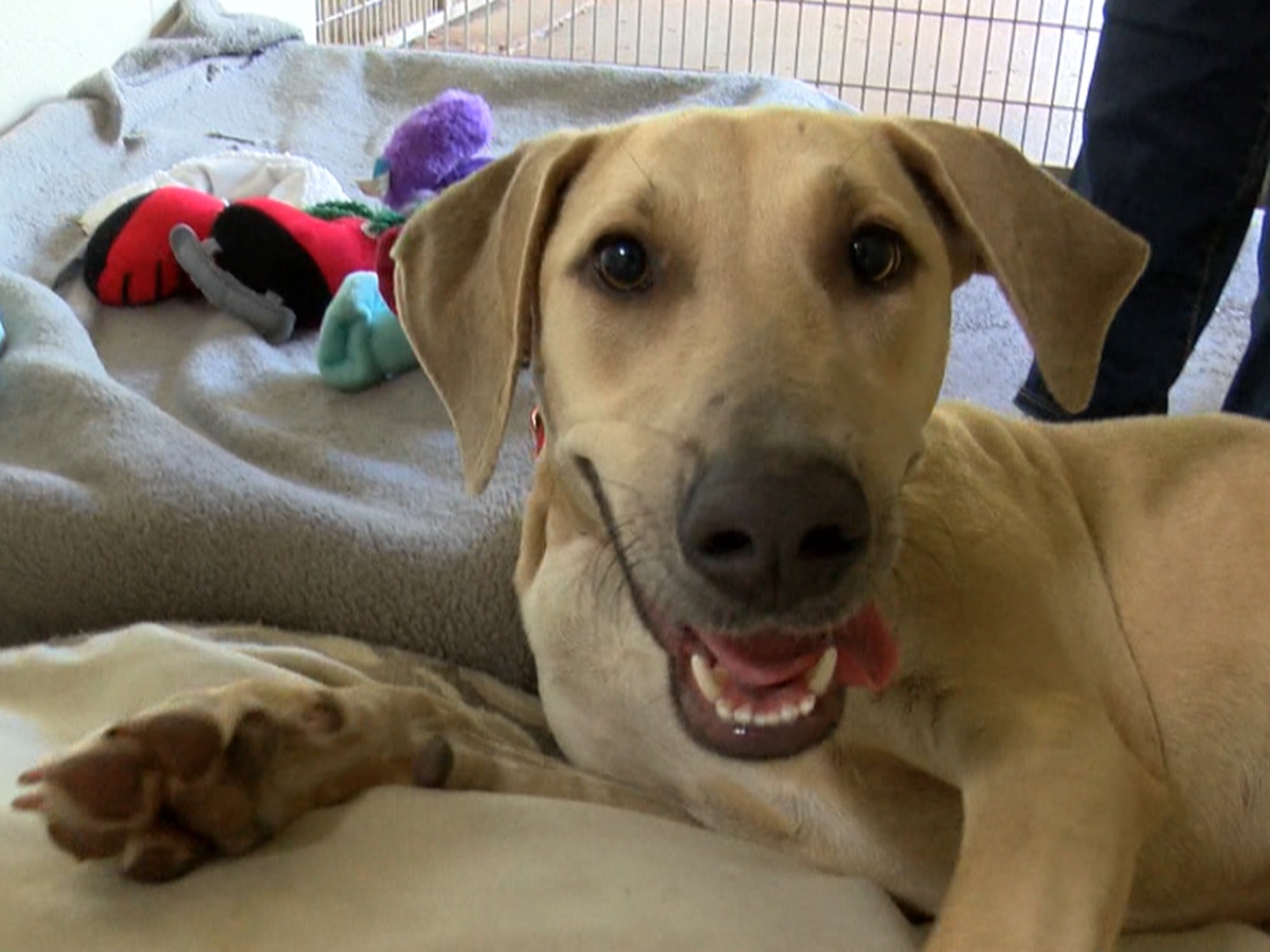 Since the pandemic began, more pets are being returned to shelters on Maui
