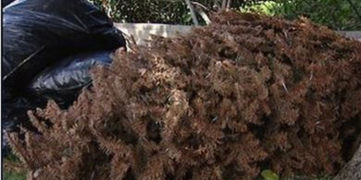 It's time to get rid of that dried out Christmas tree. Here's how to do it