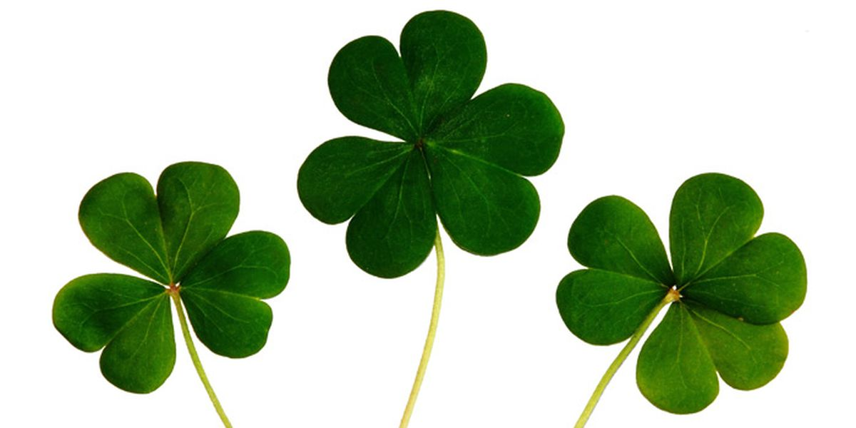 St. Patrick's Day: Eating your way to and through the holiday