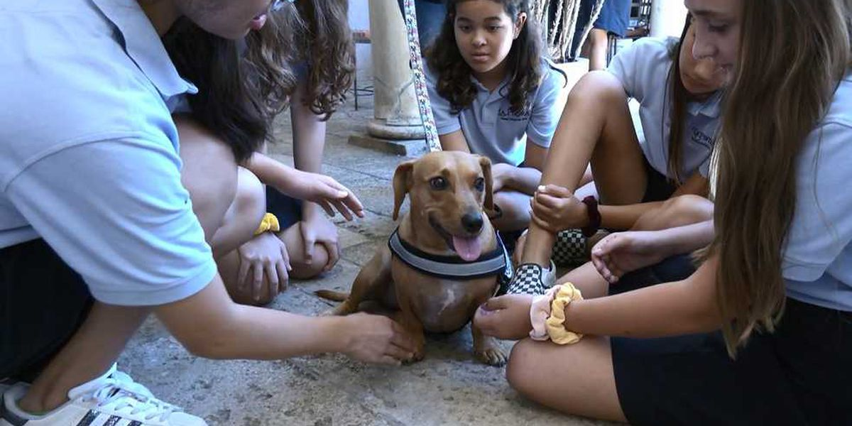 Students get a visit from a happy four-legged friend during finals week