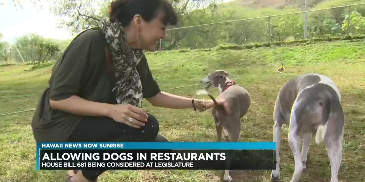 New bill would allow dogs in restaurants