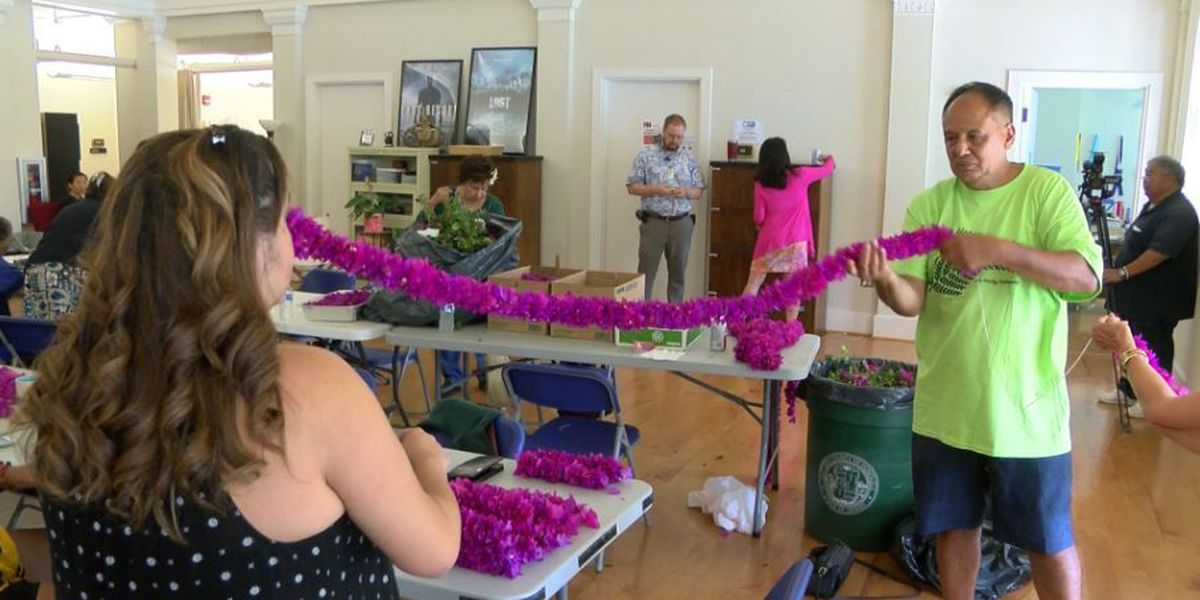 Thousands of bougainvillea flowersstrung into a 30-foot lei for Kamehameha Day