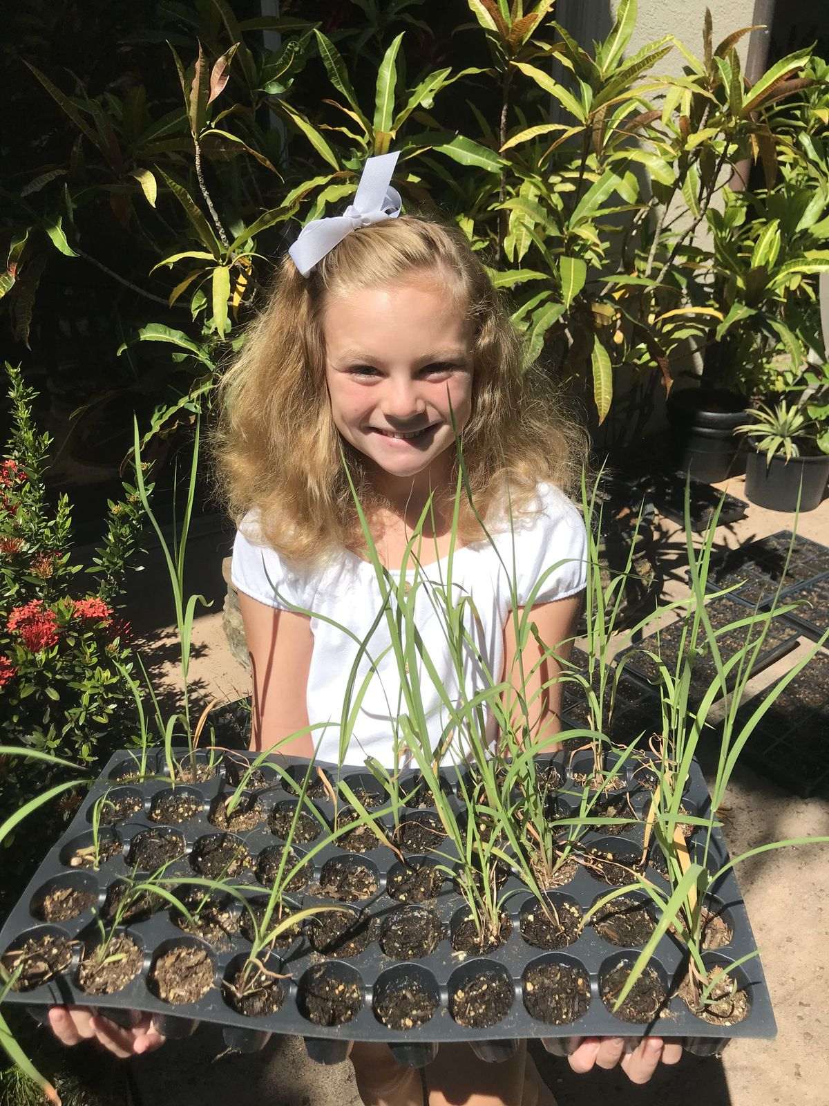 A 'prolific volunteer' grew 900 native plants to help save coral reefs. She's 10.