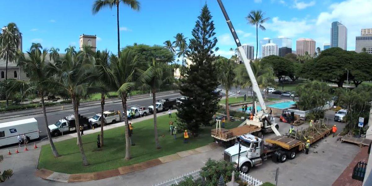 The holidays are here! Honolulu Hale welcomes its Christmas tree